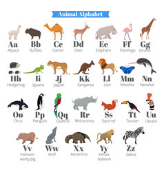 English alphabet for kids with cute wild vector