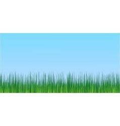 juicy green grass blue sky background vector image