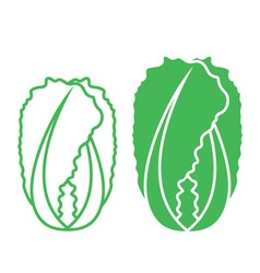 Chinese Cabbage vector image