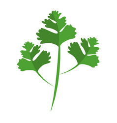 coriander leaves icon vector image