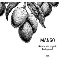 hand drawn background with mango vintage vector image