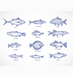 hand drawn ocean sea river and lake fishes set vector image