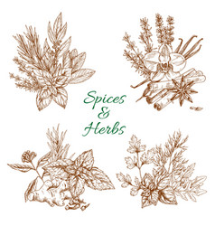 Spices or herbs sketch seasonings poster vector