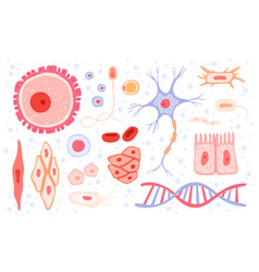Cells collection human blood structure micro vector