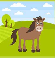 cute brown horse on the grass field vector image