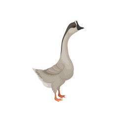 Flat icon of gray goose side view wild vector