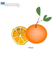Fresh orange a popular fruits in fiji vector