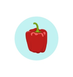 Icon red bell peppersweet pepper or capsicum vector image