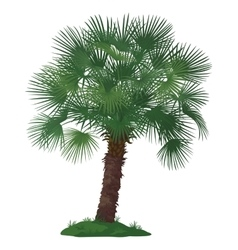 Palm Tree and Green Grass vector