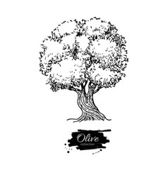 olive tree hand drawn vector image vector image