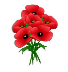 Bouquet of poppies vector