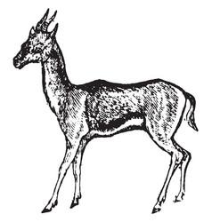Gazelle vintage vector