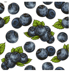 seamless blueberry pattern vector image