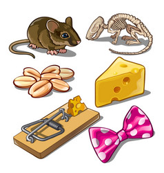 set objects on subject catching mice vector image