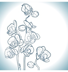orchid isolated on white vector image