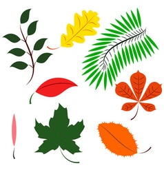 Colored different leaves vector image