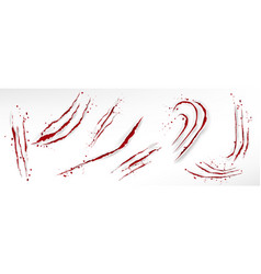 Cat claw scratches with blood drops vector