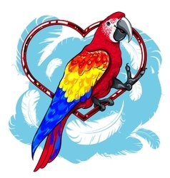 colorful red parrot with blue wings vector image