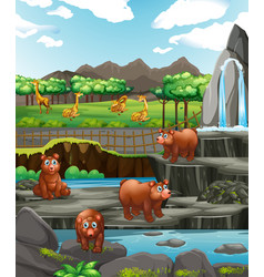 scene with bears and giraffes at zoo vector image