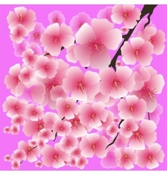 Spring Pink Flowers Isolated on Pink Background vector image vector image