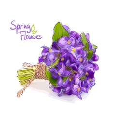 Small bouquet with meadow violets vector image vector image