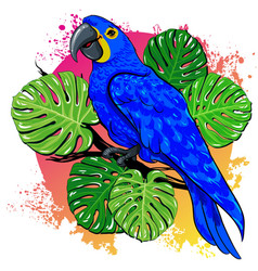 Beautiful summer drawing with parrot palm vector