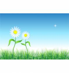 chamomile on green field vector image