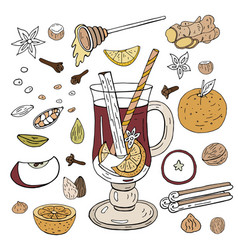 hand-drawn mulled wine ingredients and spices for vector image