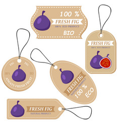labels with various fruitsfor fig vector image