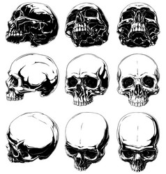 Realistic horror detalied graphic human skulls set vector