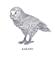strigops habroptila - kakapo owl parrot vector image