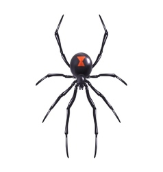 Realistic spider isolated vector image vector image