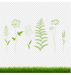 Green grass set isolated transparent background vector
