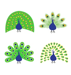 Peacock set Feather out open tail Beautiful Exotic vector