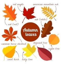 autumn leaves set 2 vector image vector image