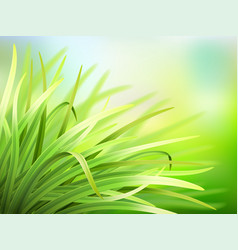 spring background with fresh green grass vector image vector image