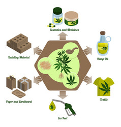 Hemp plant cannabis leaf and hemp processing vector