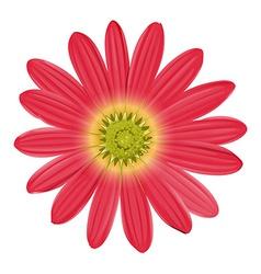A pink sunflower vector