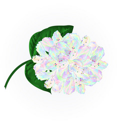 Colorful rhododendron branch flowers vector
