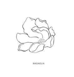 Hand drawn magnolia flower botanical design vector