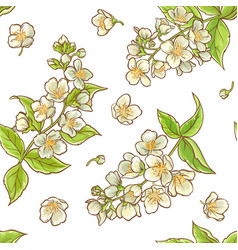jasmine branch pattern vector image