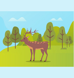 Natural park with biodiversity for deer animals vector