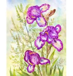 Purple irises on meadow background watercolor vector