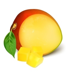 Ripe fresh mango with slices vector image