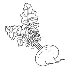 Turnip with leaves Line vector image