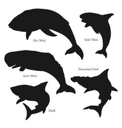 whales and sharks ocean predator silhouettes vector image