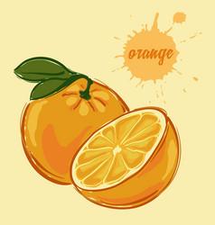 hand draw of orange vector image vector image