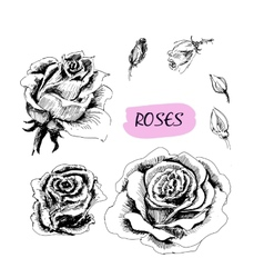 Roses Set of vector image