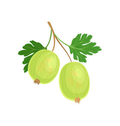 Green gooseberry on stem vector
