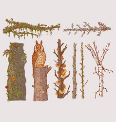 Hand drawn forest trees set vector